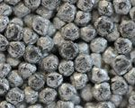 アルミニウム 焼結 多孔質